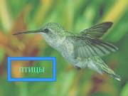 Презентация Внешнее и внутреннее строение птиц