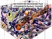 Презентация voloknistaya soed tkan