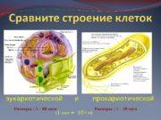 эукариотической и  прокариотической