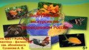 Виртуальная экскурсия по заповедникам России МУК ЦБС г