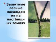 * Защитные лесные насажден ия на пастбищн ых