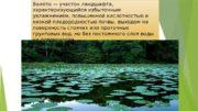 Болоото — участок ландшафта,  характеризующийся избыточным увлажнением,