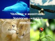 Человек и животные.  Зоология — наука о